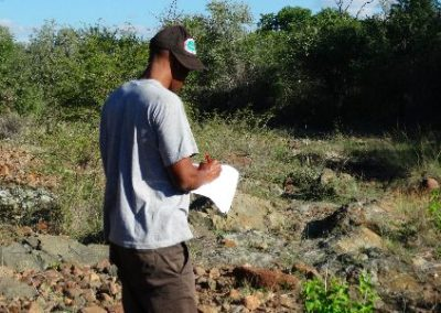 Bird monitoring data recording Conservation Internship