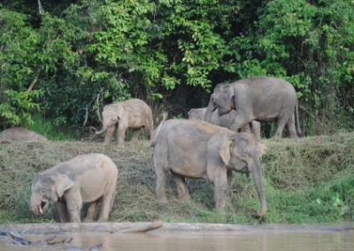 Elephants environmental conservation and community empowerment in Borneo