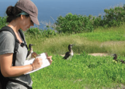 Monitoring bird activity turtle and marine conservation Ecuador