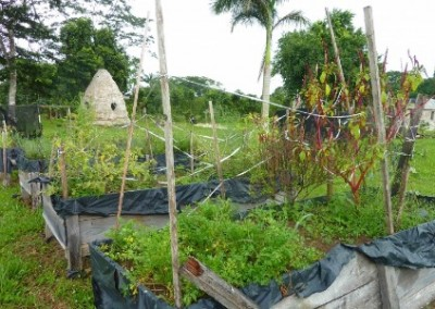 Organic garden family building Belize