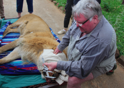 Lion rescue Bulawayo Wildlife Rescue Sanctuary in Zimbabwe