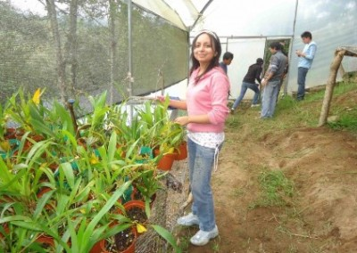 Working in a greenhouse economic community development Ecuador