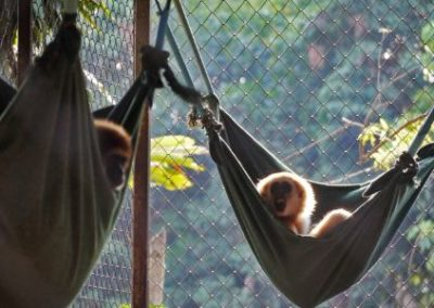 gibbons in bed