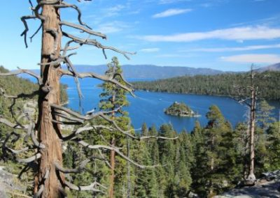 Forest Views Lake Tahoe